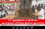 100 ஆண்டுக்கால பட்டுப்போன ஆலமரத்தை உயிர்பிக்கும் இயற்கை ஆர்வலர்கள்