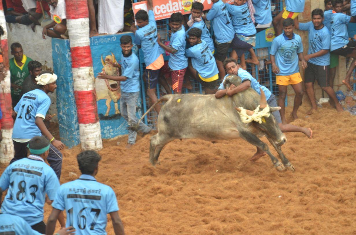 2018-ம் ஆண்டி மதுரை அலங்காநல்லூர் ஜல்லிக்கட்டு