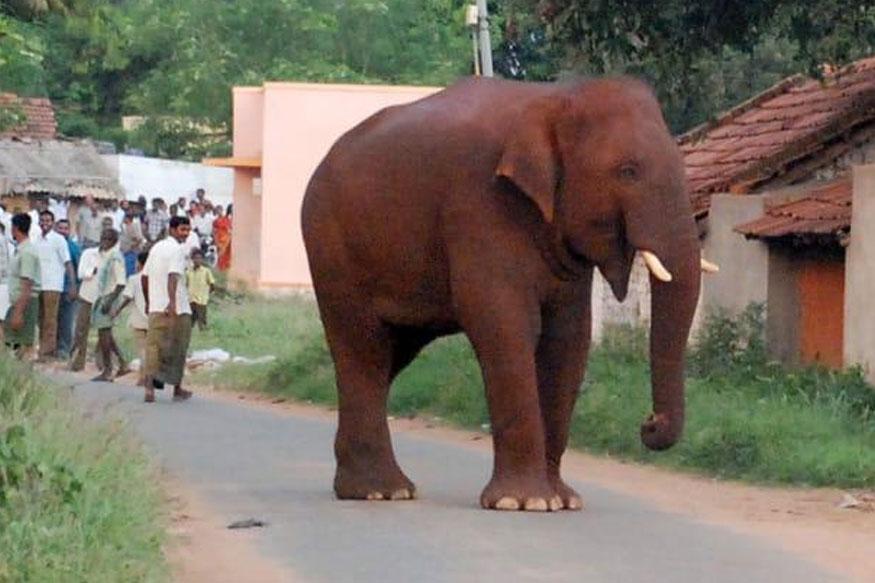 chinnathambi, சின்னத்தம்பி