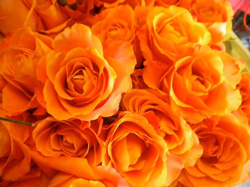 ஆரஞ்சு ரோஸ் : ஆரஞ்சு நிற ரோஜா உற்சாகம் மற்றும் அன்பை வெளிபடுத்தக் கூடியது. ஒருவேலை சிவப்பு ரோஜா இல்லை என்றால் ஆரஞ்சு நிற ரோஜாவை கொடுக்கலாம். இது ரொமான்ஸையும் வெளிபடுத்தும். நீங்கள் ரொமாண்டிக் ஜோடி என்றால் ஆரஞ்சு நிற ரோஜாவைக் கொடுக்கலாம்.